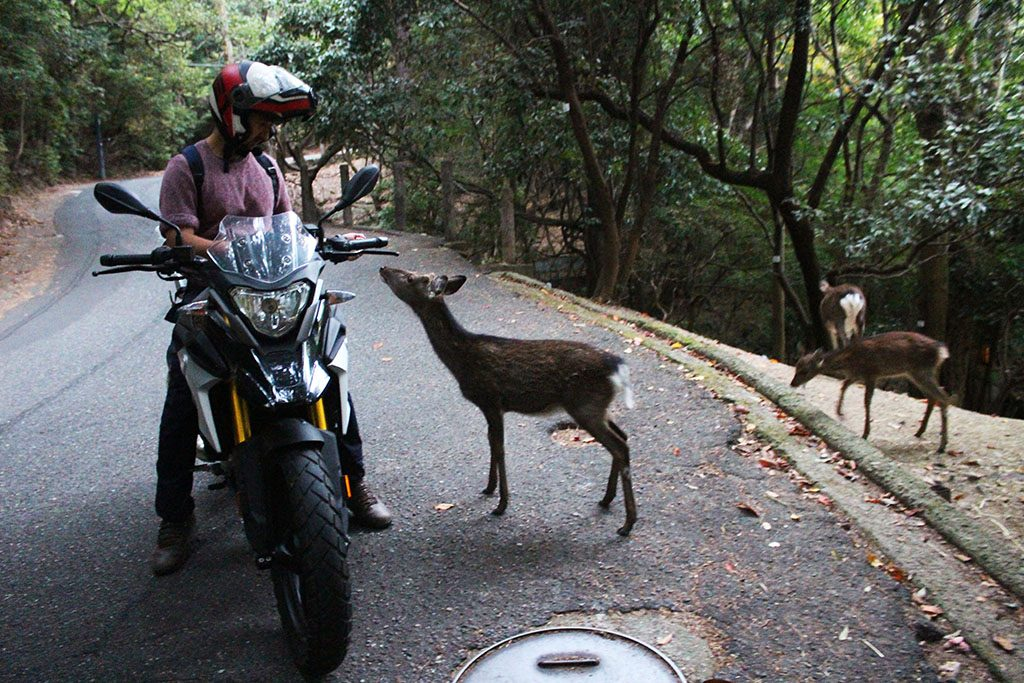 BMW G310GS motorcycling and feeding deer in Japan