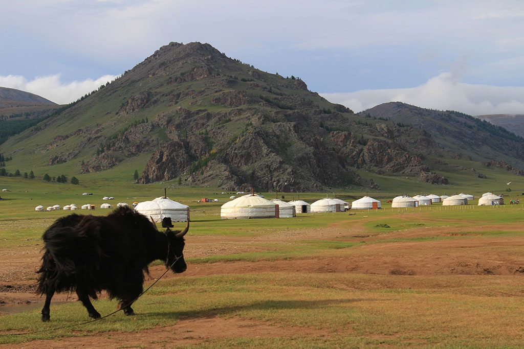 Yurts and buffallos in Mongolia